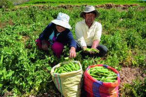 AngloAmerican - Desarrollo agrícola